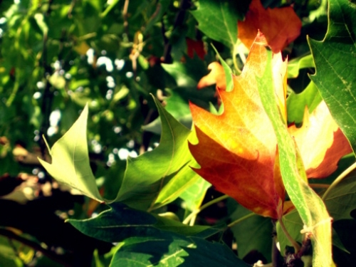 almost-fall-leaves